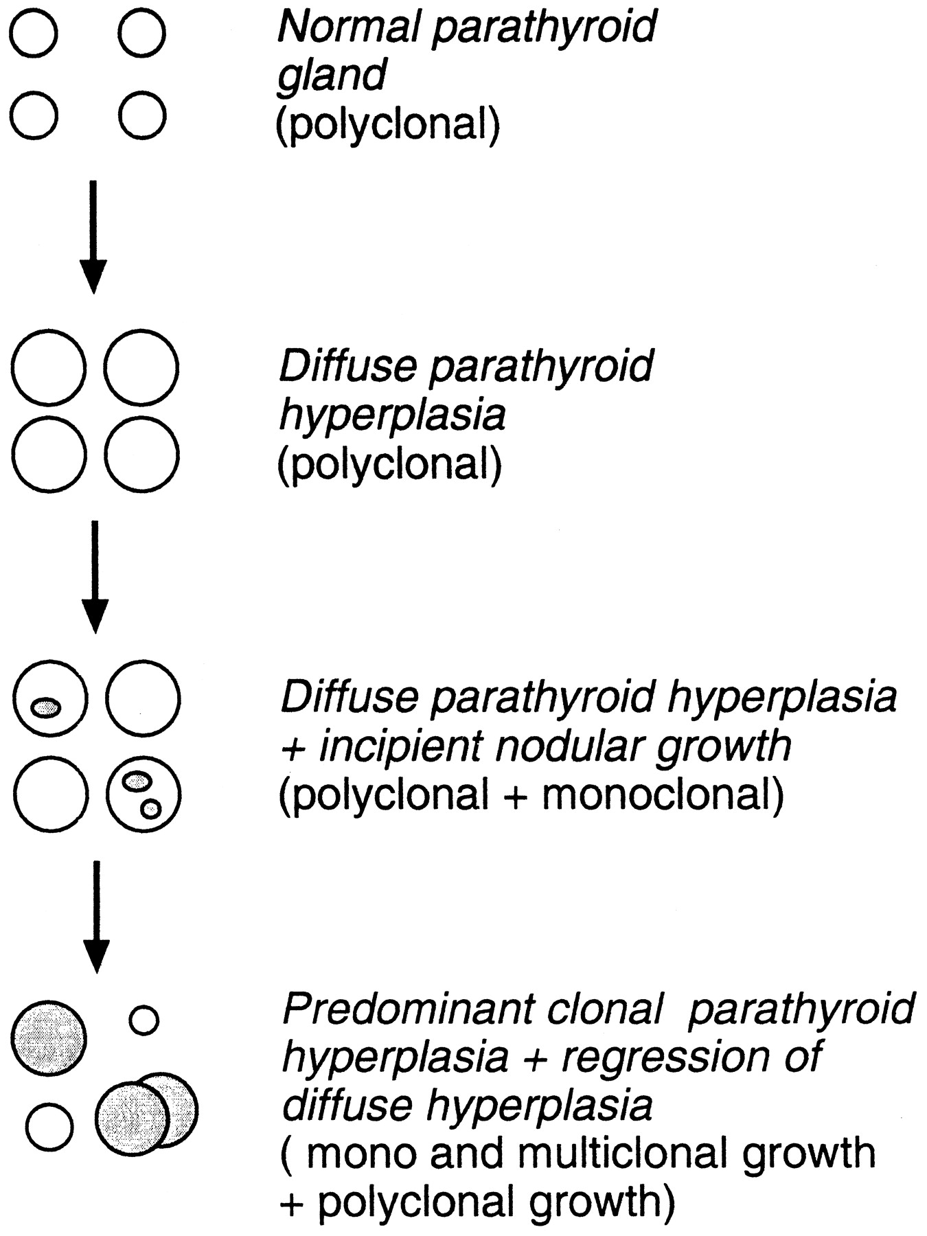 Cell Biology of Parathyroid Gland Hyperplasia in Chronic Renal ...