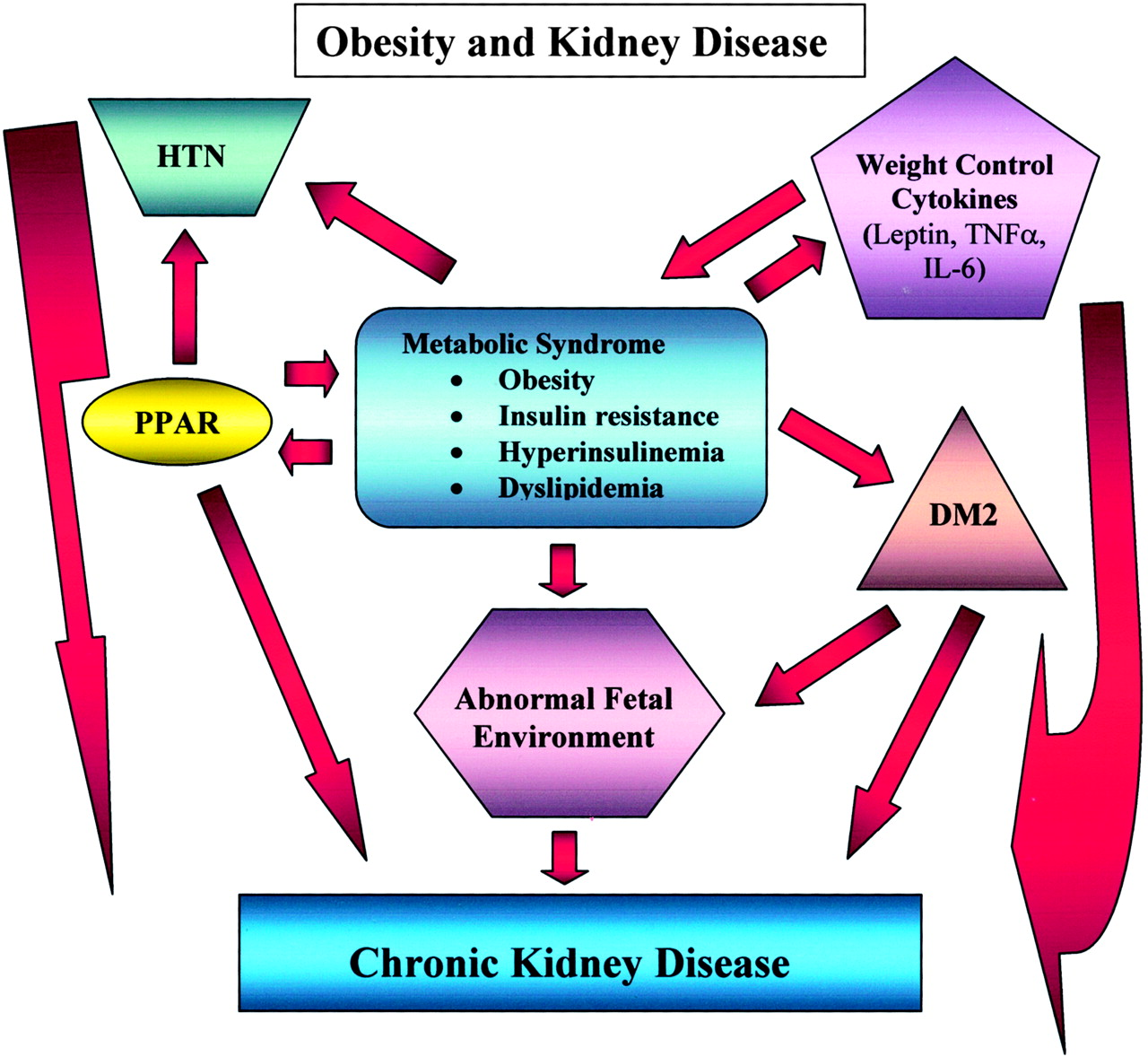 Overview Obesity What Does It Have To Do With Kidney Disease