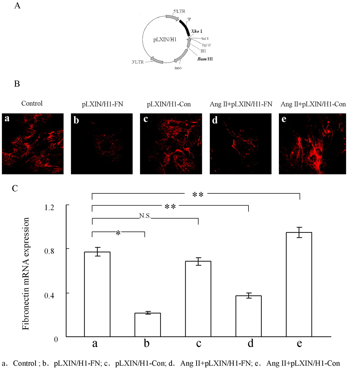Knockdown of Fibronectin Induces Mitochondria-Dependent