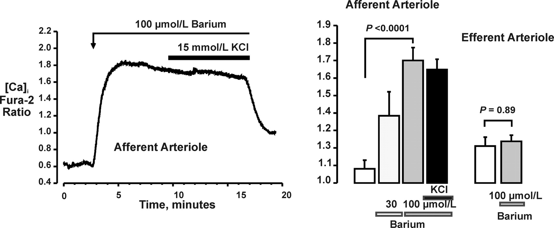 Inward Rectifier K Currents And Kir21 Expression In Renal Afferent