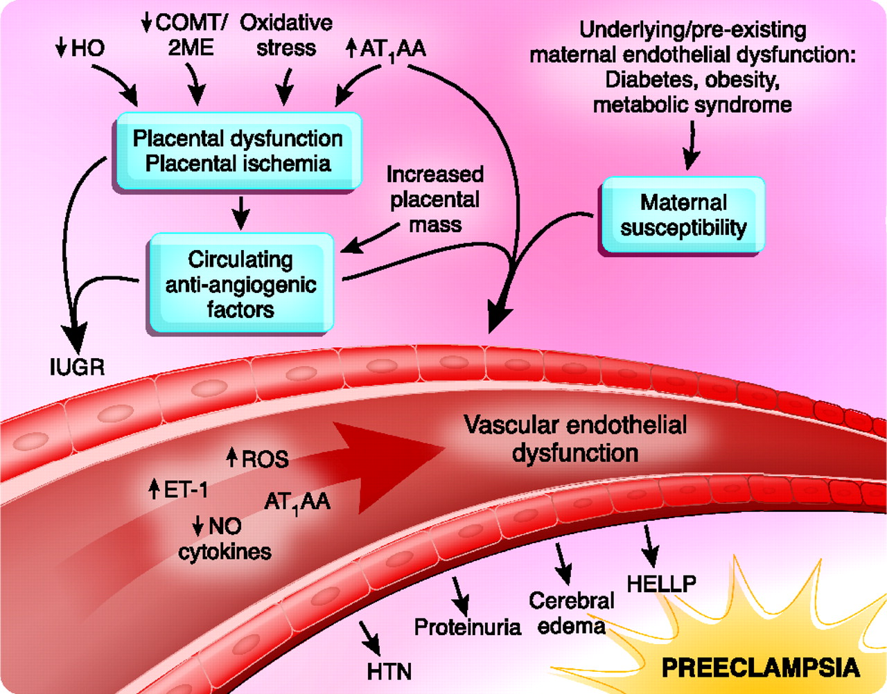 Pregnancy and the Kidney | American Society of Nephrology