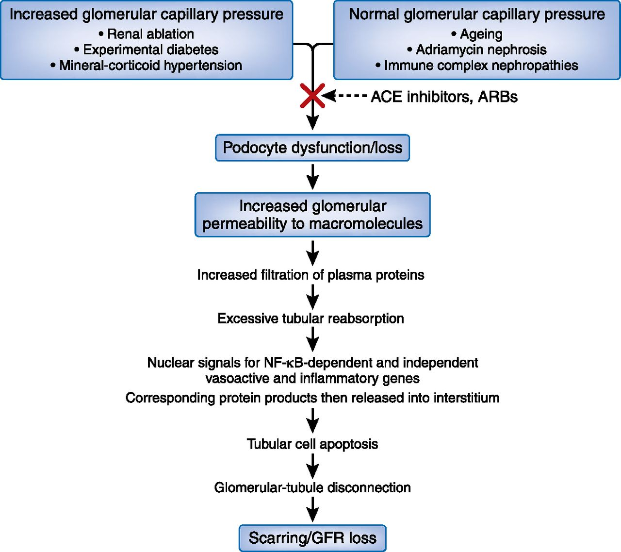 Mechanisms And Treatment Of Ckd American Society Of Nephrology