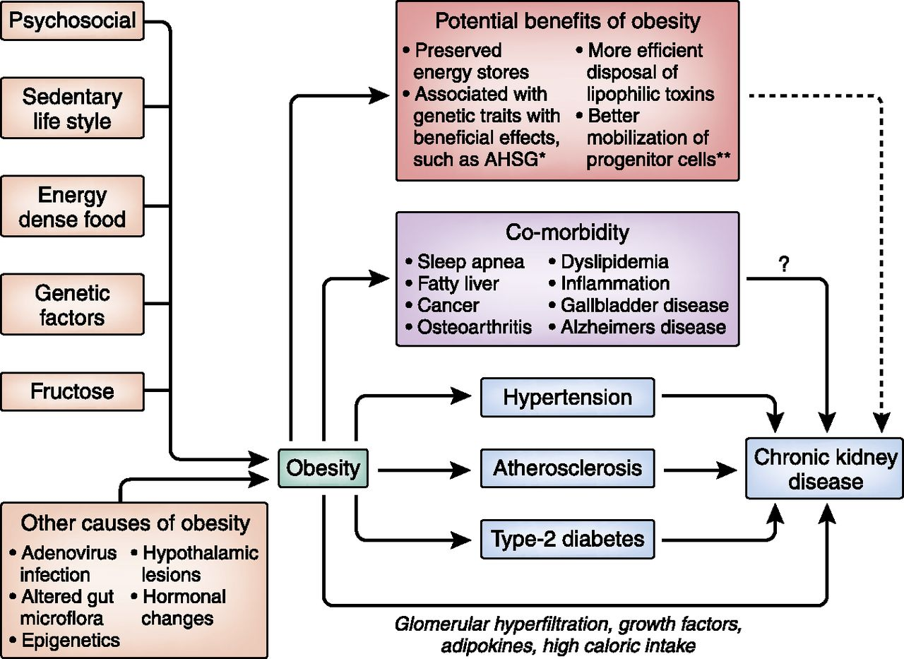 obesity in ckd u2014what should nephrologists know