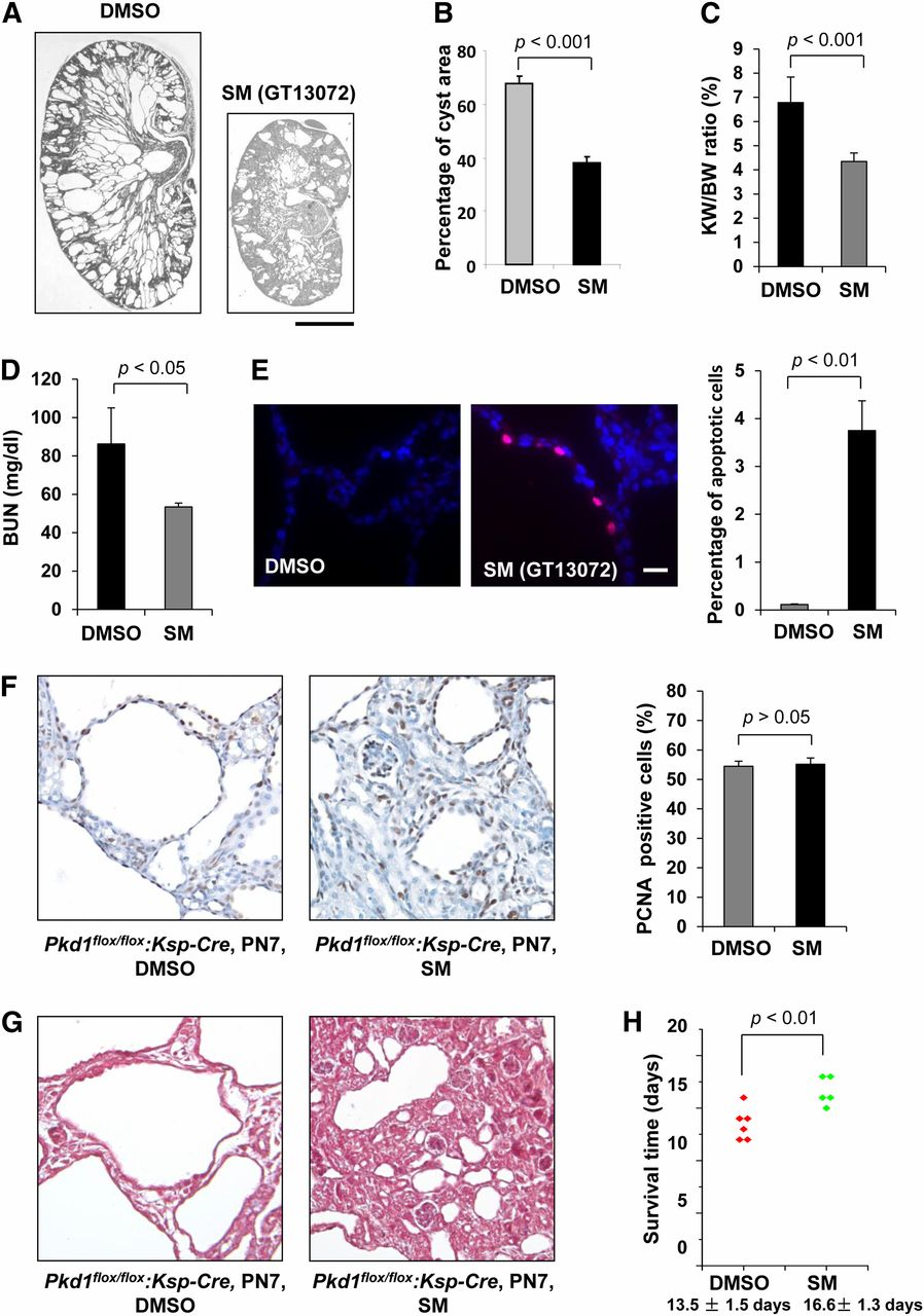 Smac-Mimetic–Induced Epithelial Cell Death Reduces the Growth of