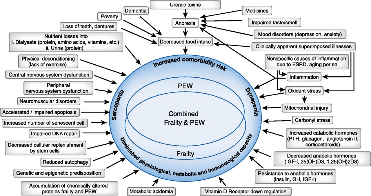 Frailty and Protein-Energy Wasting in Elderly Patients with