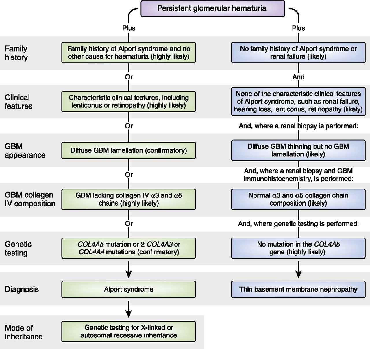 Expert Guidelines For The Management Of Alport Syndrome