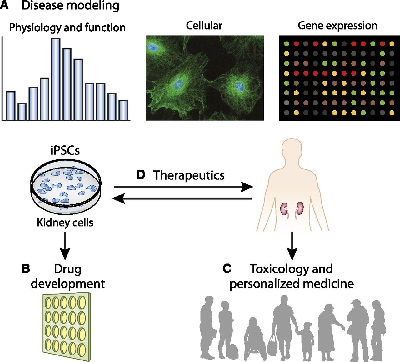 Human Kidney Cell Reprogramming: Applications for Disease Modeling