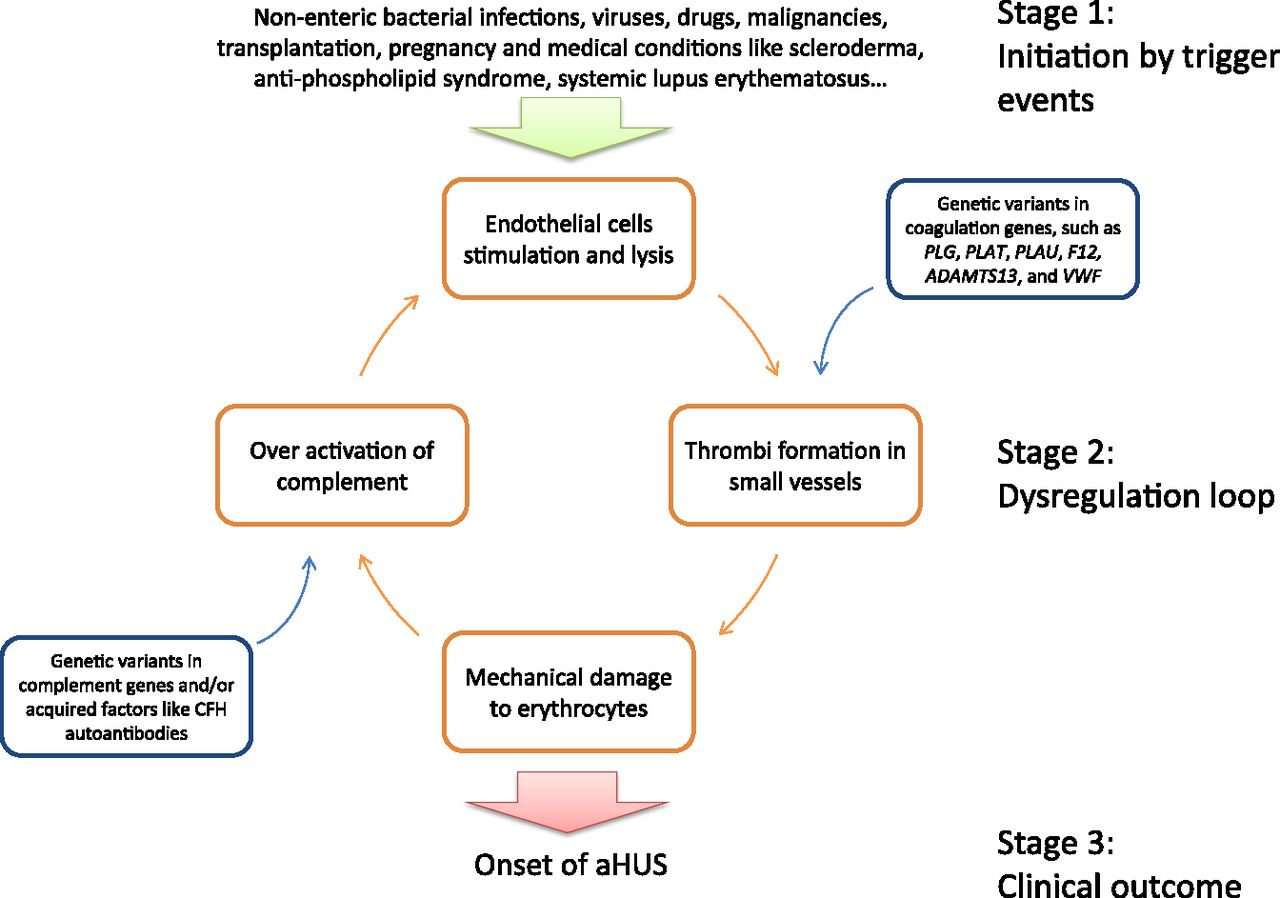The Complement System Concept Map.Comprehensive Genetic Analysis Of Complement And Coagulation Genes