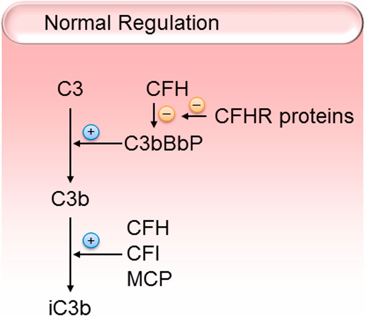 Kidney Disease Caused by Dysregulation of the Complement