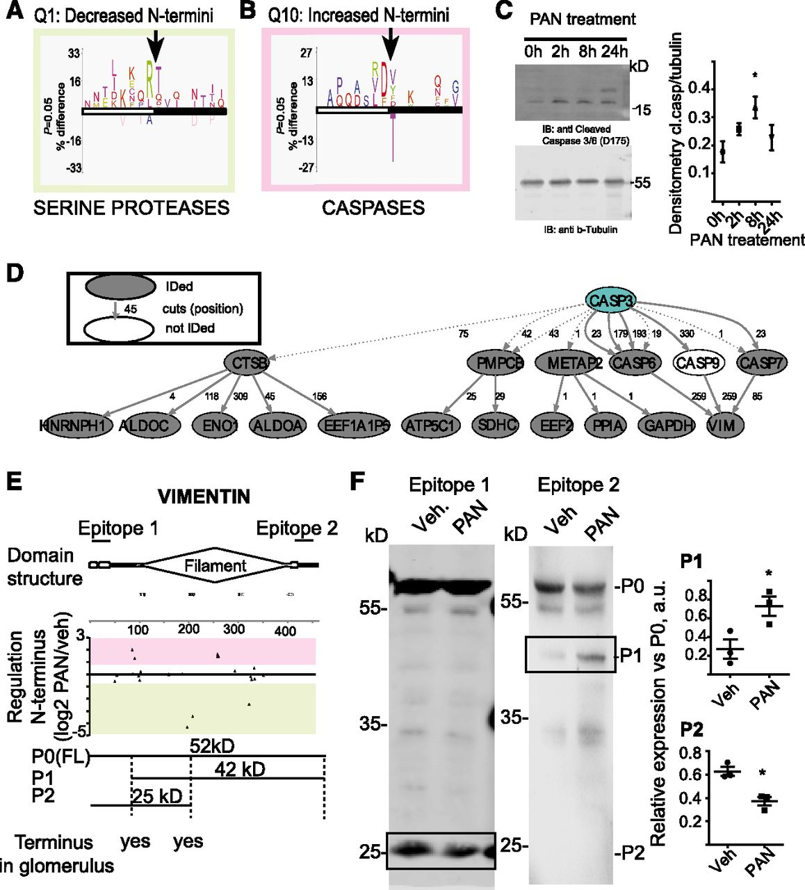 N-Degradomic Analysis Reveals a Proteolytic Network Processing the