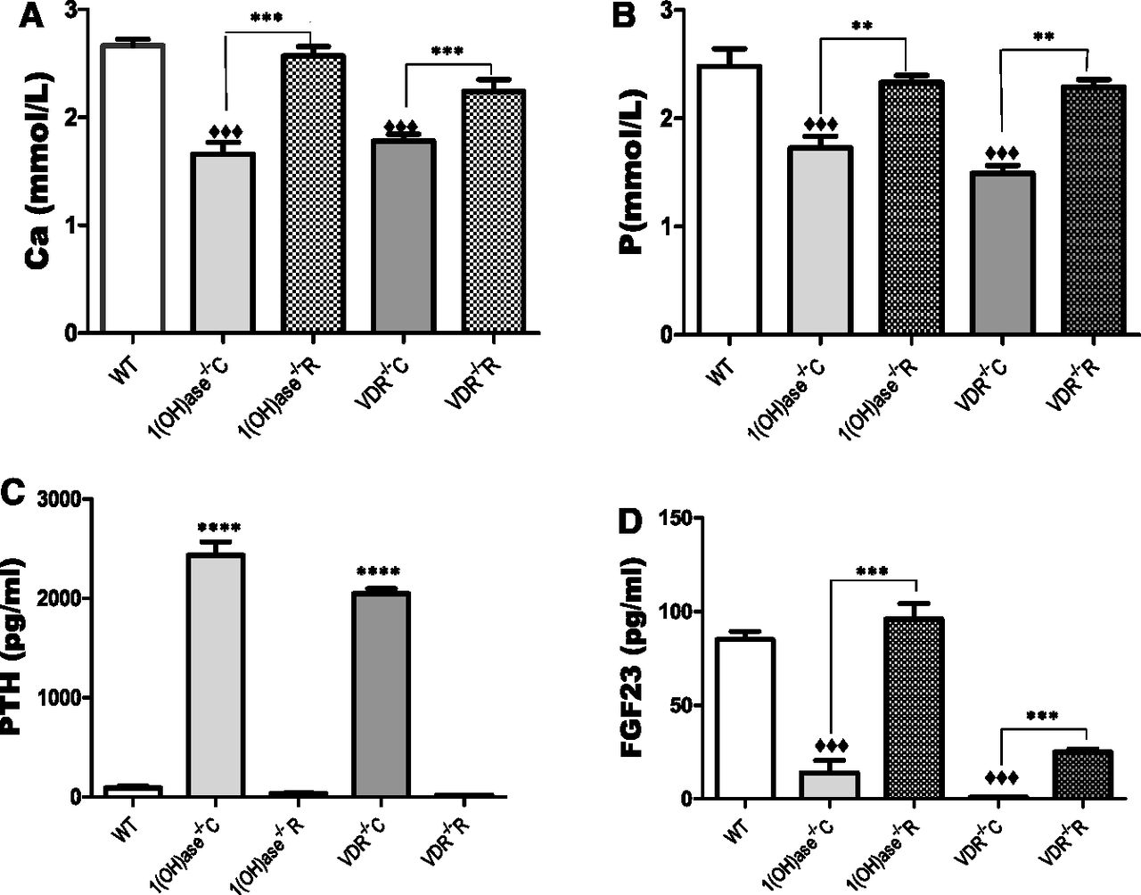 Fibroblast Growth Factor 23 Regulation by Systemic and Local