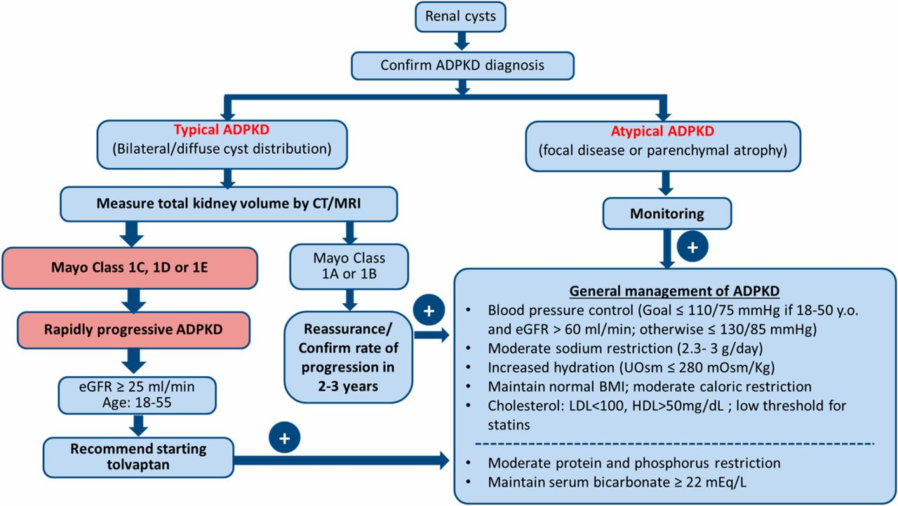 A Practical Guide For Treatment Of Rapidly Progressive Adpkd With Fig 448 Improved Duty Cycle Control Download Figure