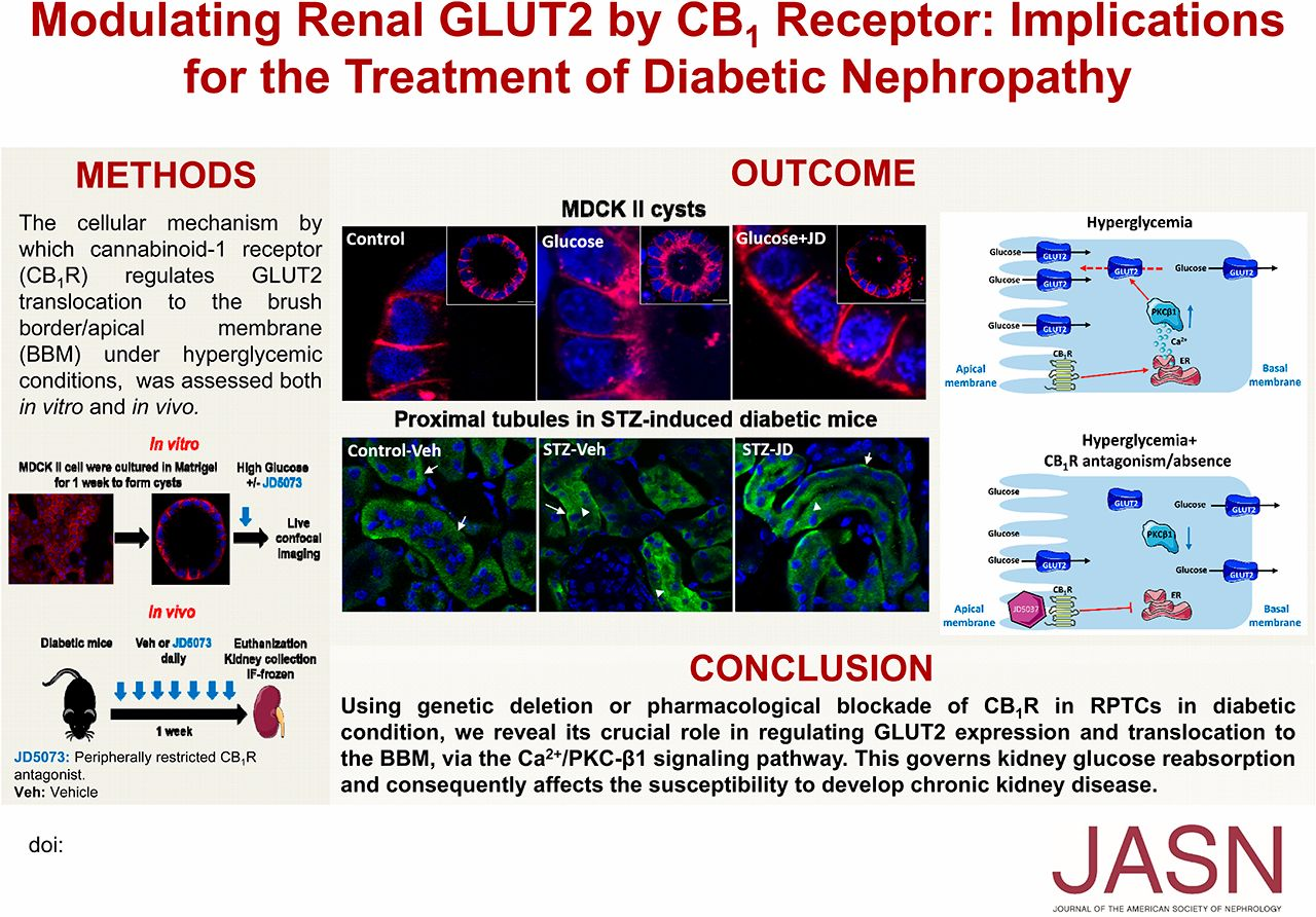 All About Anna 2005 Download modulation of renal glut2the cannabinoid-1 receptor