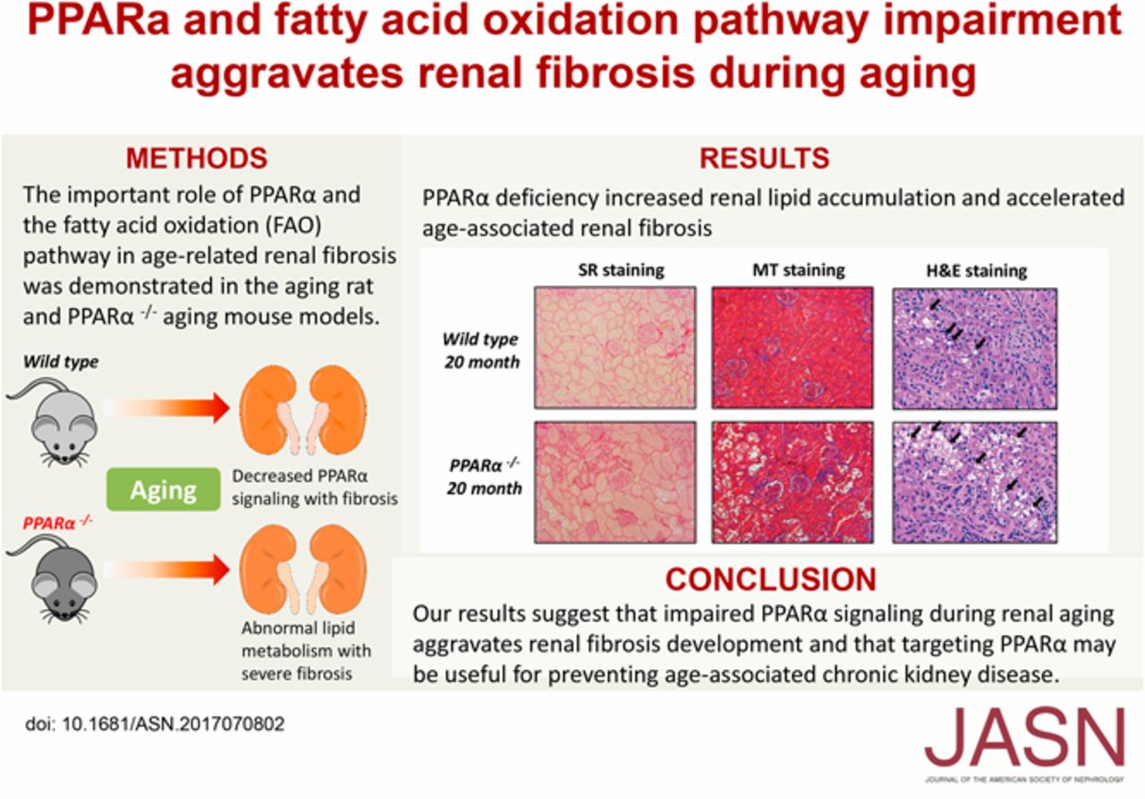 impairment of ppar u03b1 and the fatty acid oxidation pathway