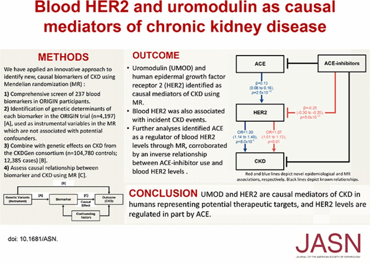 Blood Her2 And Uromodulin As Causal Mediators Of Ckd American Society Of Nephrology