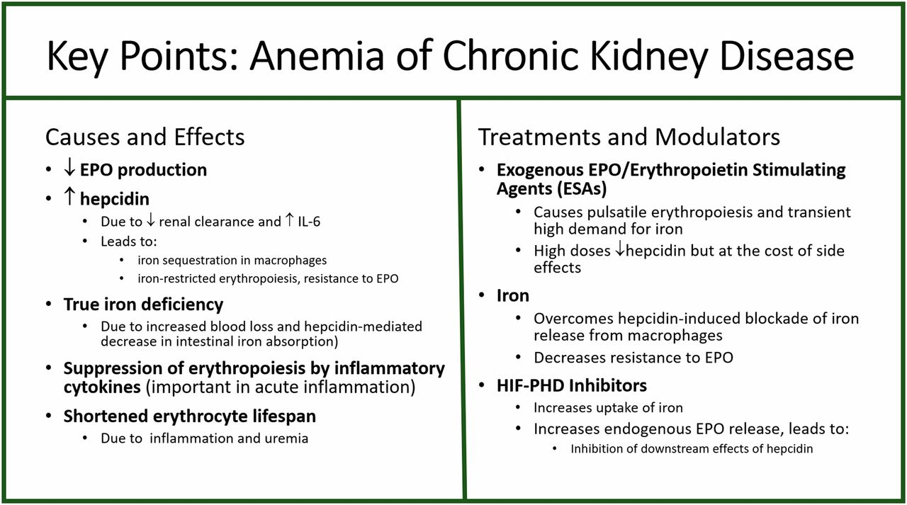 Iron Deficiency In Chronic Kidney Disease Updates On Pathophysiology Diagnosis And Treatment American Society Of Nephrology