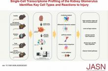 Single-Cell Transcriptome Profiling of the Kidney Glomerulus Identifies Key Cell Types and Reactions to Injury