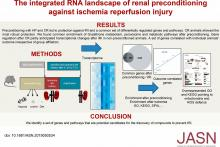 The Integrated RNA Landscape of Renal Preconditioning against Ischemia-Reperfusion Injury