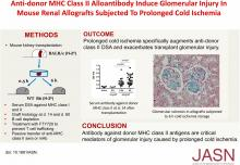 Anti-donor MHC Class II Alloantibody Induces Glomerular Injury in Mouse Renal Allografts Subjected to Prolonged Cold Ischemia