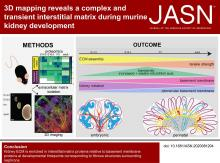 3D Mapping Reveals a Complex and Transient Interstitial Matrix During Murine Kidney Development