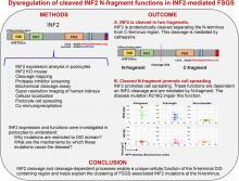 FSGS-Causing INF2 Mutation Impairs Cleaved INF2 N-Fragment Functions in Podocytes