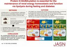 Protein O-GlcNAcylation Is Essential for the Maintenance of Renal Energy Homeostasis and Function <em>via</em> Lipolysis during Fasting and Diabetes