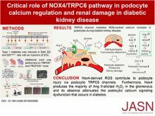 A NOX4/TRPC6 Pathway in Podocyte Calcium Regulation and Renal Damage in Diabetic Kidney Disease
