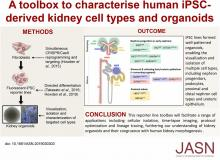 A Toolbox to Characterize Human Induced Pluripotent Stem Cell–Derived Kidney Cell Types and Organoids