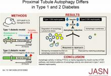 Proximal Tubule Autophagy Differs in Type 1 and 2 Diabetes