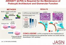 ARHGEF7 (<em>β</em>-PIX) Is Required for the Maintenance of Podocyte Architecture and Glomerular Function