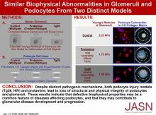 Similar Biophysical Abnormalities in Glomeruli and Podocytes from Two Distinct Models