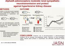 <em>α</em>2A-Adrenoceptors Modulate Renal Sympathetic Neurotransmission and Protect against Hypertensive Kidney Disease