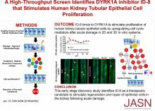 A High-Throughput Screen Identifies DYRK1A Inhibitor ID-8 that Stimulates Human Kidney Tubular Epithelial Cell Proliferation
