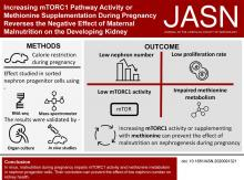 Increasing mTORC1 Pathway Activity or Methionine Supplementation during Pregnancy Reverses the Negative Effect of Maternal Malnutrition on the Developing Kidney