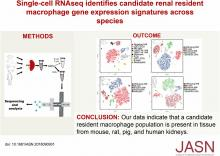 Single-Cell RNA Sequencing Identifies Candidate Renal Resident Macrophage Gene Expression Signatures across Species
