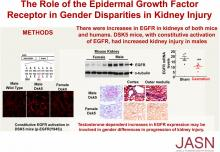 The Role of the EGF Receptor in Sex Differences in Kidney Injury