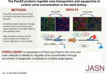 Pax2 and Pax8 Proteins Regulate Urea Transporters and Aquaporins to Control Urine Concentration in the Adult Kidney
