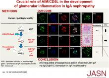 Crucial Role of AIM/CD5L in the Development of Glomerular Inflammation in IgA Nephropathy