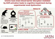 Uremic Toxic Blood-Brain Barrier Disruption Mediated by AhR Activation Leads to Cognitive Impairment during Experimental Renal Dysfunction
