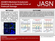 ADAM10-Mediated Ectodomain Shedding Is an Essential Driver of Podocyte Damage