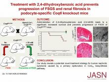 Treatment with 2,4-Dihydroxybenzoic Acid Prevents FSGS Progression and Renal Fibrosis in Podocyte-Specific <em>Coq6</em> Knockout Mice