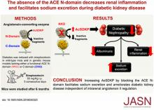 The Absence of the ACE N-Domain Decreases Renal Inflammation and Facilitates Sodium Excretion during Diabetic Kidney Disease