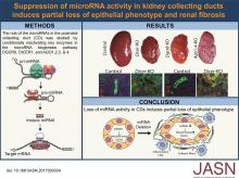 Suppression of microRNA Activity in Kidney Collecting Ducts Induces Partial Loss of Epithelial Phenotype and Renal Fibrosis