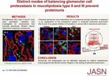 Distinct Modes of Balancing Glomerular Cell Proteostasis in Mucolipidosis Type II and III Prevent Proteinuria