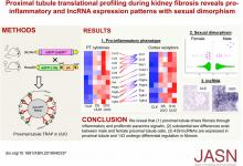 Proximal Tubule Translational Profiling during Kidney Fibrosis Reveals Proinflammatory and Long Noncoding RNA Expression Patterns with Sexual Dimorphism