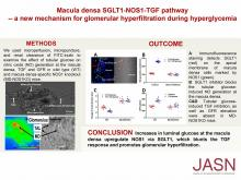 Macula Densa SGLT1-NOS1-Tubuloglomerular Feedback Pathway, a New Mechanism for Glomerular Hyperfiltration during Hyperglycemia