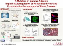 A Mutation in <em>γ</em>-Adducin Impairs Autoregulation of Renal Blood Flow and Promotes the Development of Kidney Disease