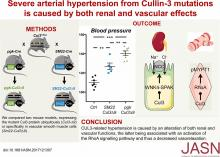 Severe Arterial Hypertension from Cullin 3 Mutations Is Caused by Both Renal and Vascular Effects