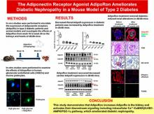 The Adiponectin Receptor Agonist AdipoRon Ameliorates Diabetic Nephropathy in a Model of Type 2 Diabetes