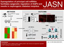 Dysregulation of Principal Cell miRNAs Facilitates Epigenetic Regulation of AQP2 and Results in Nephrogenic Diabetes Insipidus